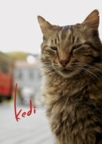 Kedi on Kanopy