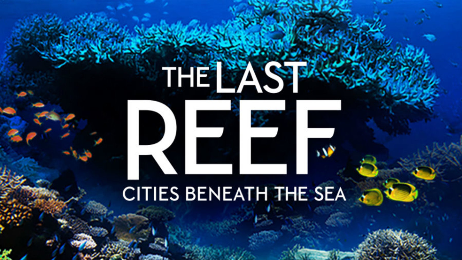 The Last Reef - A Lush Look at Ocean Reefs