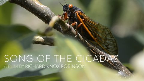Song of the Cicadas - The Experience of Political Prisoners