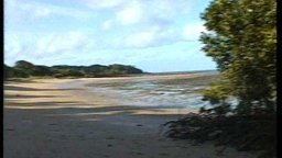 Gelam - Torres Strait Islands - Story Background & Storyteller Profile Documentary