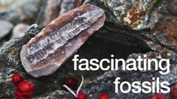 Fascinating Fossils