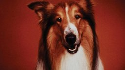 The Story of Lassie