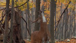 The Secret Life of Whitetails