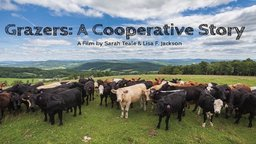 Grazers: A Cooperative Story - Local Beef Farms Competing with Industrial Companies
