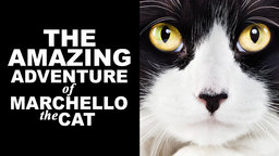 The Amazing Adventure of Marchello the Cat